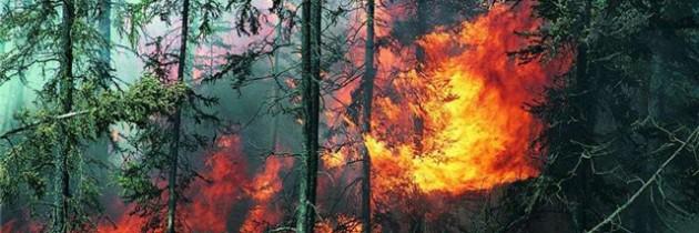 О пожарной безопасности в лесах