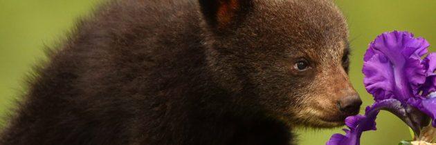 Мастер-классе «Забавные зверята» (медвежонок)