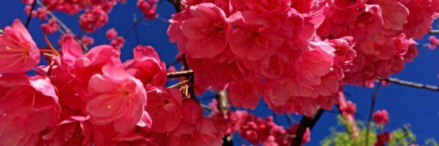 I Всероссийский конкурс детского, юношеского и семейного творчества «Весна красна»