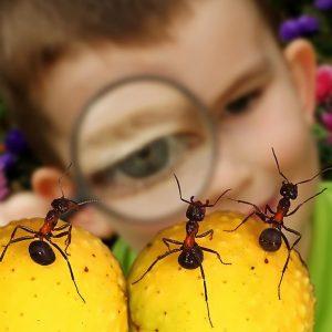 ребенок и муравьи